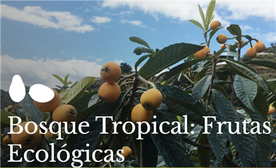 Bosque Tropical: Frutas Ecológicas