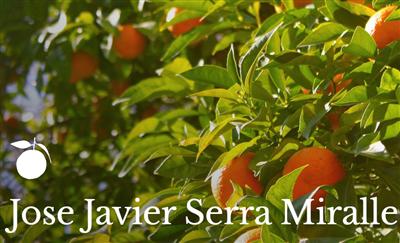 Jose Javier Serra Miralles